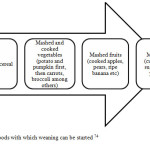 Figure 2.8: Foods with which weaning can be started 74