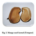 Fig. I. Mango seed kernel (Totapuri)