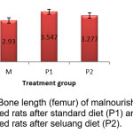 Bone length (femur) of malnourished rats (M),  malnourished rats after standard diet (P1) and  malnourished rats after seluang diet (P2).