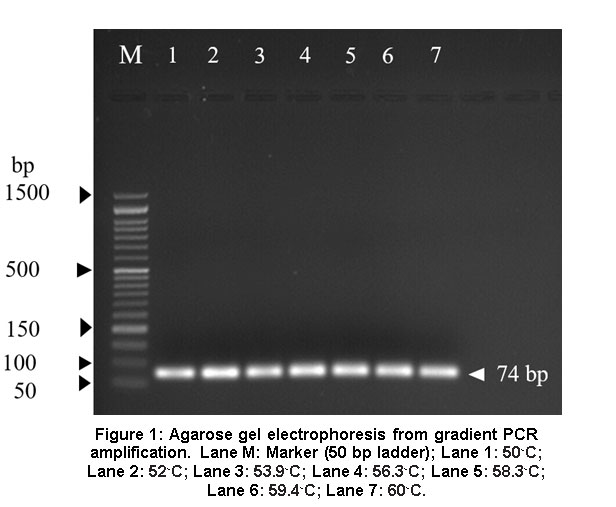 Design and Validation of Short-Amplicon Length PCR Assay for